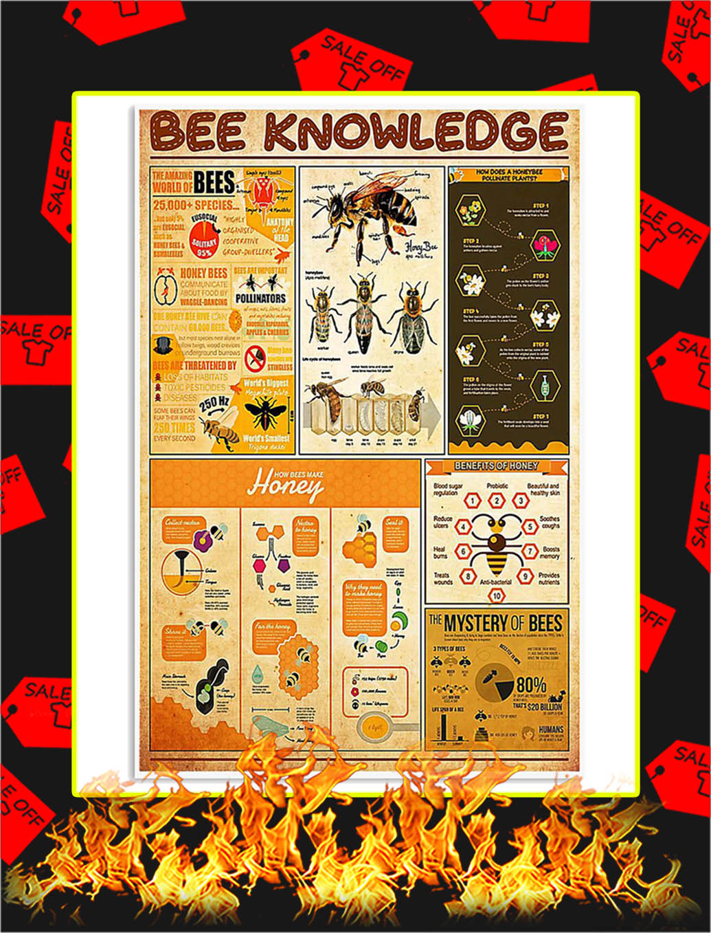 Bee Knowledge Poster - 24x36