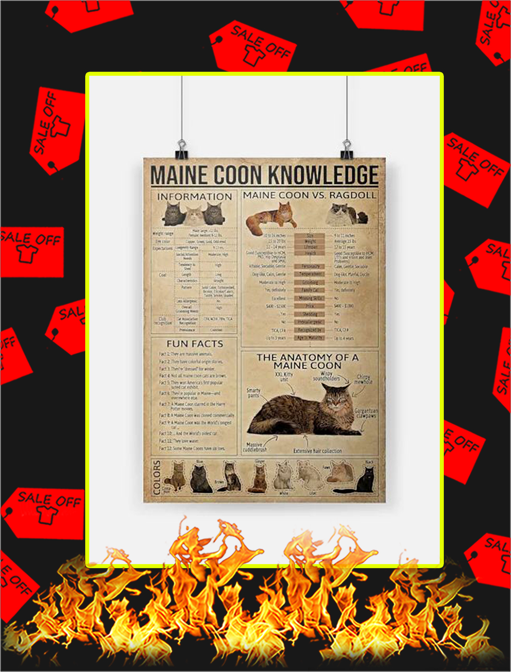 Maine Coon Knowledge Poster - A4
