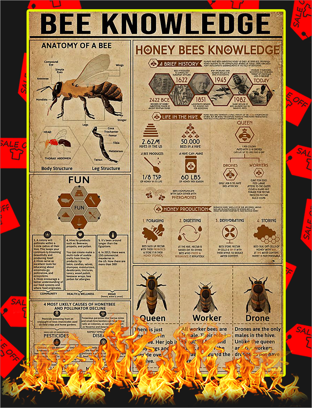 Bee Knowledge Poster - A4