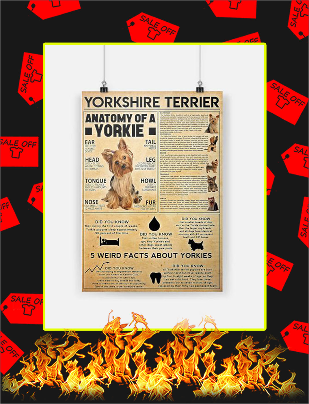 Yorkshire Terrier Poster - A3