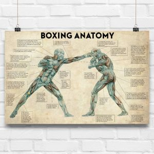 Boxing anatomy poster - Picture 3